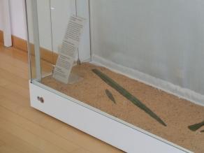Bronzeschwert in der Vitrine