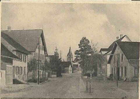 Rebstock und Utilis 1907
